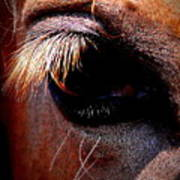 Img_9984 - Horse Art Print