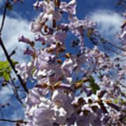 Imperial Tree Flowers Art Print
