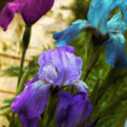 Impossible Irises Art Print