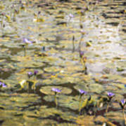 Impressions Of Giverny Art Print