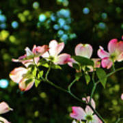 In Another Spring 2013 002 Art Print