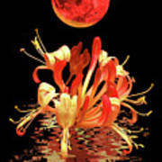 In The Heat Of The Night 2 Honeysuckle Red Moon Art Print