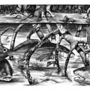 In The Mangroves Art Print