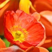 In The Tulip Garden Art Print