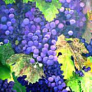 In The Vineyard Art Print