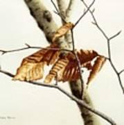 In The Winter Breeze Art Print