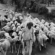 India: Shepherd, 1966 Art Print