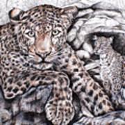 Indian Leopard Art Print