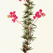 Indigo Plant Art Print