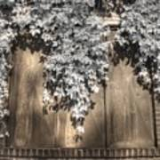 Infrared Botanical Sepia  Art Print