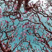 Infrared Frangipani Tree Art Print