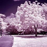Infrared Garden Art Print