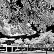 Infrared Indian River State College Hendry Campus #5 Art Print