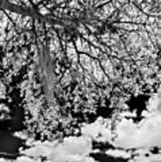 Infrared Indian River State College Hendry Campus #8 Art Print