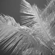 Infrared Palm Trees Art Print
