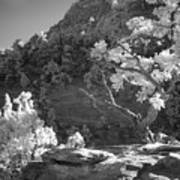 Infrared Photo Of A Twisted Pine Tree Art Print