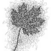 Ink Drawing Of Maple Leaf Art Print