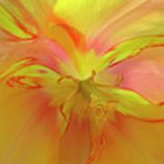 Inner Tulip Art Print