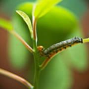 Insect Larva 5 Art Print