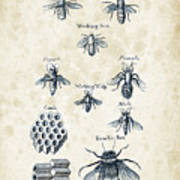 Insects - 1792 - 14 Art Print