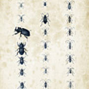 Insects - 1832 - 09 Art Print