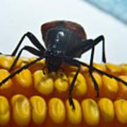 Inspecting Beetle Art Print