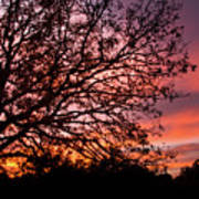 Intense Sunset Tree Silhouette Art Print