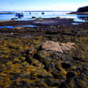 Inter-tidal Zone Deer Isle Art Print