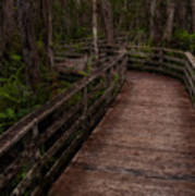 Into Audubon Corkscrew Swamp Sanctuary Art Print
