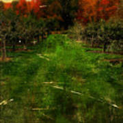 Into The Apple Orchard Art Print