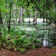 Into The Green Swamp Art Print