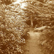 Into The Woods Sepia Art Print