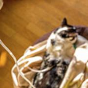 Intravenous Drip Cat Art Print