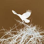 Inverted Crow Art Print