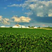 Iowa Soybean Farm Art Print