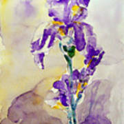 Iris 2 Art Print