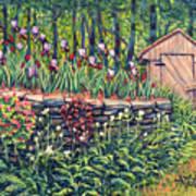 Iris Accents Art Print
