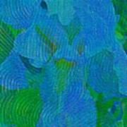 Iris Ageless Blossom  Art Print