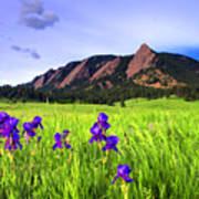 Iris And Flatirons Art Print