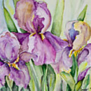 Iris Beauties Art Print
