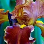 Iris Beauty Photograph Art Print