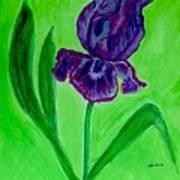 Iris Bloom Art Print