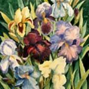 Iris Collection Art Print