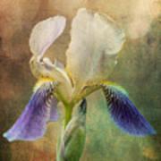 Iris Composite Art Print