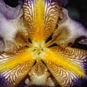 Iris Details Art Print
