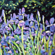 Iris En Folie Art Print