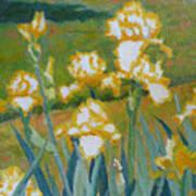 Iris Etude Art Print