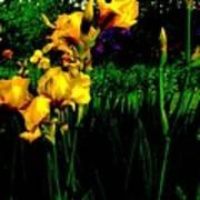 Iris Field In Abstract Art Print