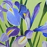 Iris Fields - Center Panel Art Print