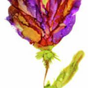 Iris Flower 2 Art Print